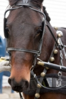 carriage-rides-08_0015