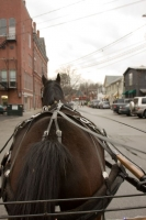 Carriage Rides 08_0062