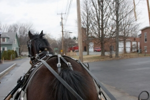 carriage-rides-08_0071