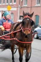 carriage-rides-08_0222