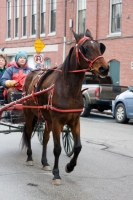 carriage-rides-08_0268